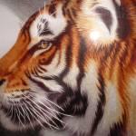 """""""tiger"""" by Dammy"""
