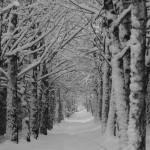 """""""Winter trees"""" by fejesb"""