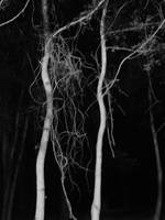 Woods at Night IX