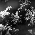 """""""Frost on Windshield"""" by thewaltonsare"""