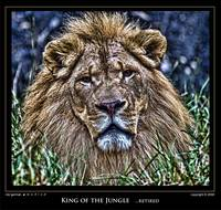 King of the Jungle...retired