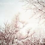 """Narnia"" by RoseyMama"