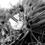 """Snow needles"" by thewaltonsare"