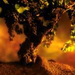 """112 Harvest Sunrise"" by willphoto"