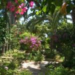 """""""Mediterranean Garden"""" by fizzyimages"""