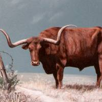 """LONGHORN STEER painting"" by AnimalsbyDiDi"