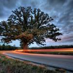 """Burr Oak 10.21.2007"" by notleyhawkins"