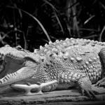 """Crocodile"" by PhotoOvr"