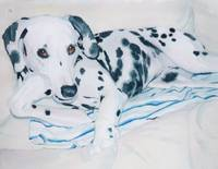 Roxie the Dalmatian
