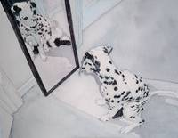 Roxie the Dalmatian 2