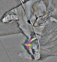 Claws Out Kitty In Play