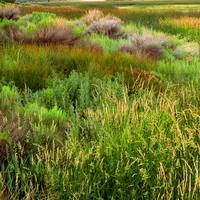 Marsh Colors Square