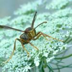 """""""Wasp V"""" by jenofdiamond"""