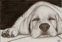 White Lab puppy sleeping