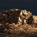"""Night Rock"" by alecrain"