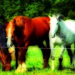 """horsepower lomo_orton"" by chandlerphotography"