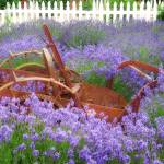 """Lavender and Rust"" by vincent-field_photography"