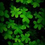 """""little green"""" by Nikki11"