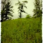 """Gettysburg Landscape"" by madeline"