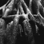"""Love Roots"" by VAphotoart"