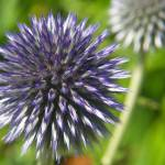 """Exploding Floral Universe"" by scottblandphotography"