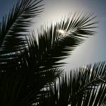 """Palm tree silhouette"" by RobynL"