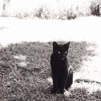 Black cat Art Prints & Posters by María Vera