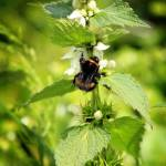 """Nettles and Bees"" by JessicaShellPhotography"
