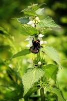 Nettles and Bees