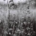 """Dried Up"" by tonybianchi"