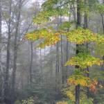 """Vermont Morning"" by Benjaminjames"