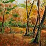 """The Woods at Betty Zane"" by catspaw"