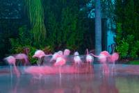 A Spanish 'Flamingo Waltz