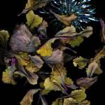 """""""Winter Garden 3"""" by LindaCavaney"""