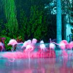 """Variations of Spanish Flamingos"" by Variations"