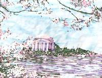 Cherry Blossoms: Jefferson Memorial