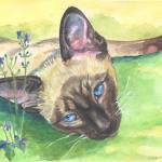 """Springtime, Siamese Cat"" by wally_doodle"