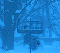 Birds feeding in storm