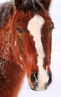 Horse Portrait by David Kocherhans