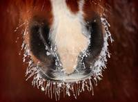 Horse Snout by David Kocherhans