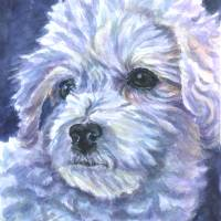 Bichon Frise, Little Softie Art Prints & Posters by Lyn Cook