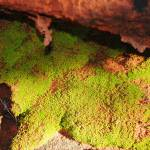 """Mossy Lava Rock"" by artman-1"