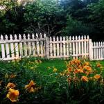 """""""Fence"""" by eboyce"""