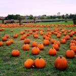 """""""Pumpkins"""" by eboyce"""