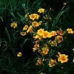 """""""Garden"""" by eboyce"""