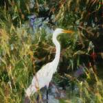 """Egret in Reeds"" by impressionistheart"