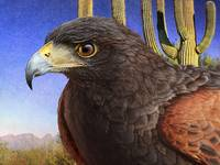 harris hawk and arizona scape