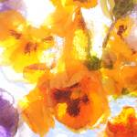 """Pansy Watercolor"" by joemamerphotography"
