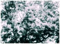 Infrared Treetop