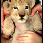 """Cub Care"" by riteshgaur"